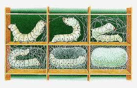 Le moulinage consiste à assembler et tordre ensemble plusieurs fils pour  n en obtenir qu un, la soie filée n étant pas assez solide pour le tissage. e9cbb9846d2